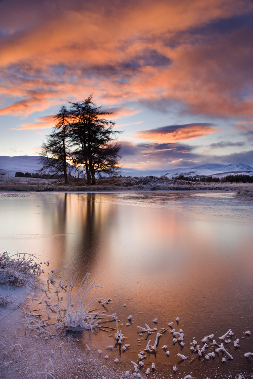 Larch trees silhouetted at sunset, Loch Tulla, Argyll, Scotland. November