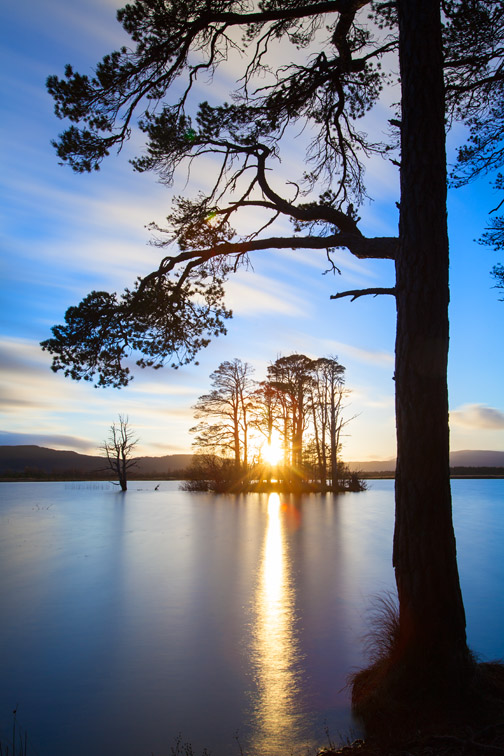 Scot's pine tree (Pinus sylvestris) and lake at sunset