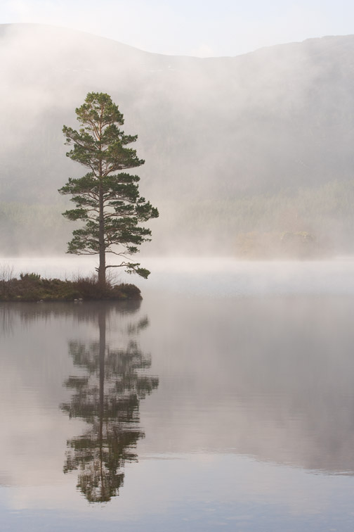 Scots pine Pinus sylvestris in mist, Loch an Eilein, Rothiemurchus, Cairngorms National Park, Scotland, April 2007.