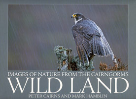 Wild Land - images of nature from the Cairngorms