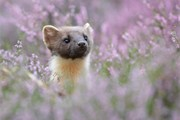 Scottish Wildlife portfolio gallery